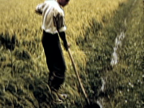 ws ms pan tu td view of po region rice farm with traces water source to alps, source of hydroelectric power / po region, italy / audio - anno 1950 video stock e b–roll