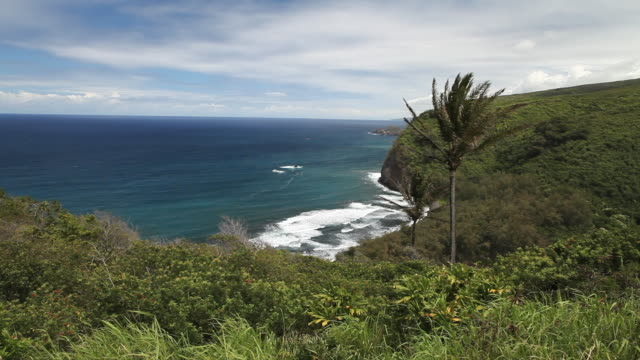 ws view of pololu valley and ocean seen from pololu valley lookout with palm trees / waimea, hawall, big island, united states    - 波打ち際点の映像素材/bロール