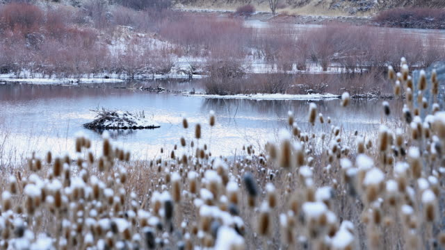 view of pond in snow covered landscape past thistle - thistle stock videos & royalty-free footage