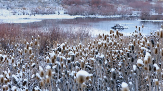 view of pond in snow covered landscape through field - thistle stock videos & royalty-free footage