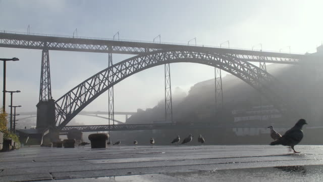 ms cu view of pont dom luis on misty morning / porto, porto district, portugal - medium group of animals stock videos & royalty-free footage
