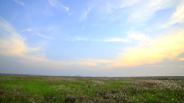 view of ppilgikkot flower bed in ueumdo island (famous tourist attractions) - 自生点の映像素材/bロール