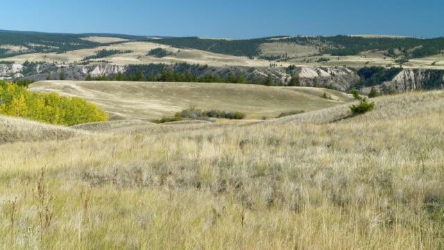 ws pan view of prairie grassland on sheep range park / near williams lake, british columbia, canada - prairie stock videos & royalty-free footage