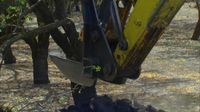 view of pulling out living almond trees - earth mover stock videos & royalty-free footage