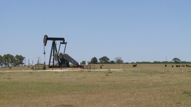 ws view of pump jack in field with cows / texas, united states - oljepump bildbanksvideor och videomaterial från bakom kulisserna