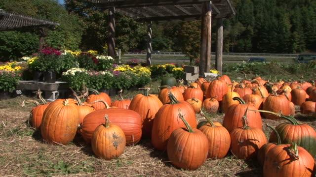 view of pumpkins in vermont united states - kurbits bildbanksvideor och videomaterial från bakom kulisserna