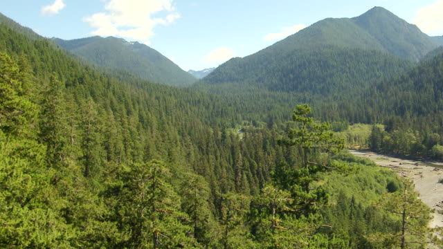 WS AERIAL View of Quinault valley with trees in foreground / Washington, United States