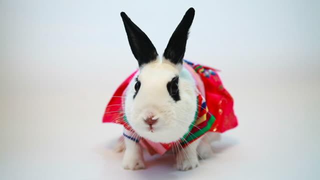 vídeos de stock, filmes e b-roll de ws view of rabbit dressingup like hanbok (korean traditional clothes) / seoul, south korea - pet clothing