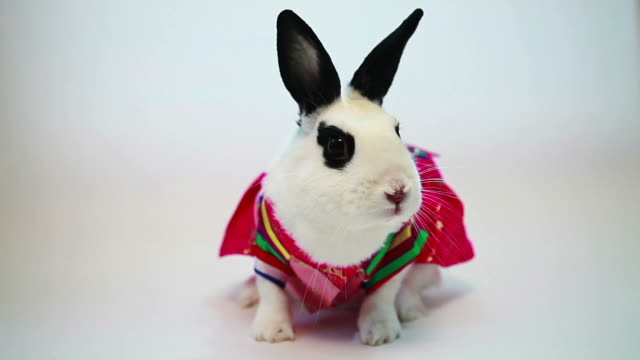 vídeos de stock, filmes e b-roll de ws view of rabbit dressingup like hanbok (korean traditional clothes) / seoul, south korea - roupa tradicional