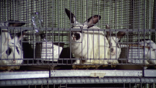 ms zi pan view of rabbits and guinea pigs in cage - petshop stock videos and b-roll footage