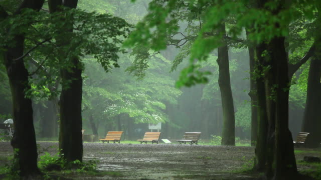 vídeos de stock e filmes b-roll de ws view of rain at park / shibuya, tokyo, japan - banco assento