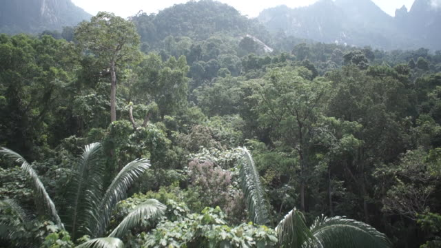 ws pov view of rainforest in malaysia - malaysia stock videos & royalty-free footage