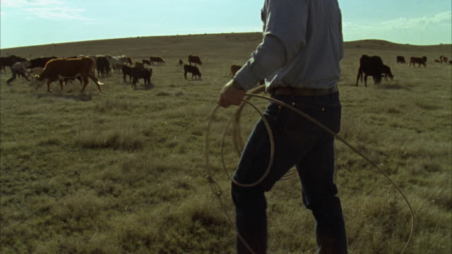 WS TU PAN View of rancher preparing rope to calf / Marfa, Texas, USA