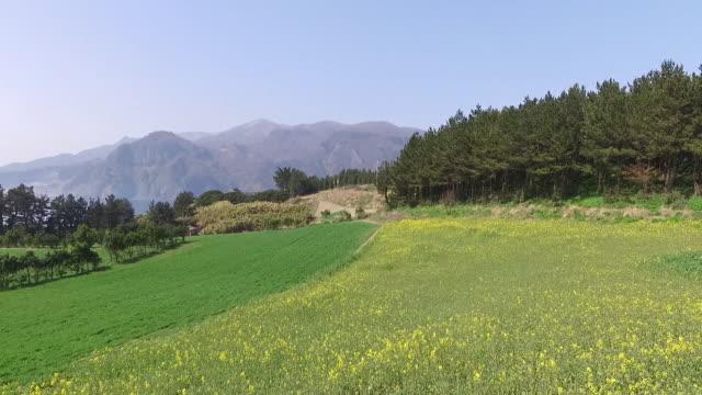 view of rape blossoms in ulleungdo island (famous travel destination), gyeongsangbuk-do, south korea - north gyeongsang province stock videos & royalty-free footage