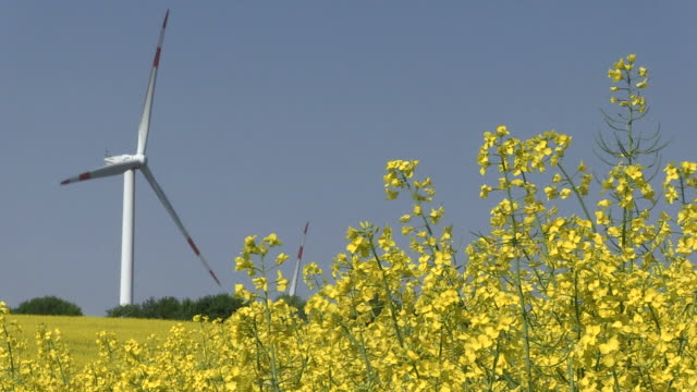 ws view of rapefield and windmill / kirf, rhineland-palatinate , germany - crucifers stock videos & royalty-free footage