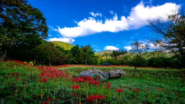 View of red spider lily at Seonunsa temple (Famous tourist attractions)
