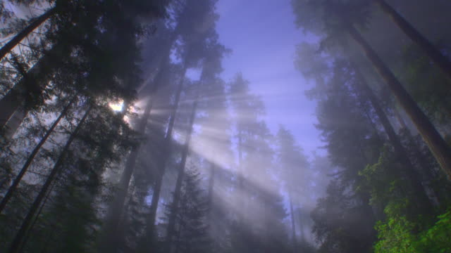 WS POV SLO MO View of redwood national park with sunbeam / Redwood National Park, California, USA