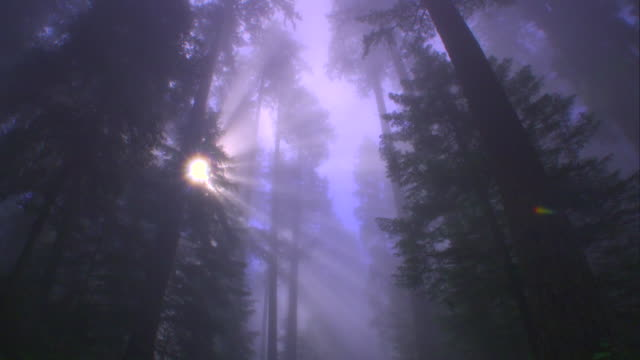 ws pov view of redwood national park with sunbeam / redwood national park, california, usa - redwood tree stock videos and b-roll footage