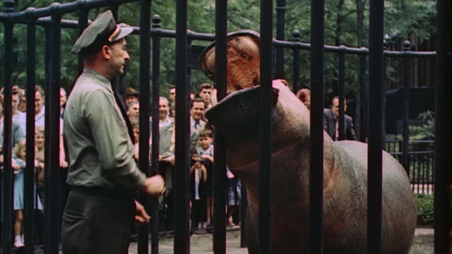 ms zi view of  rhinoceros in zoo  / los angeles, california, united state - 1960 stock videos & royalty-free footage
