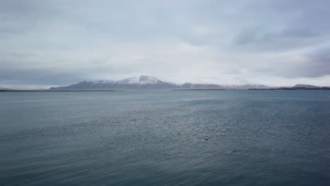 vídeos de stock, filmes e b-roll de ws view of ripples move and birds swim on sea in front of snow mountain  / reykjavik city, iceland - oceano atlântico