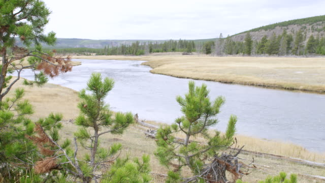 ws pov view of river and landscape area / yellowstone national park, wyoming, united states - river yellowstone stock videos and b-roll footage