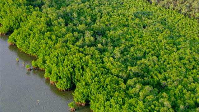 WS AERIAL View of river / Darwin, Northern Territory, Australia