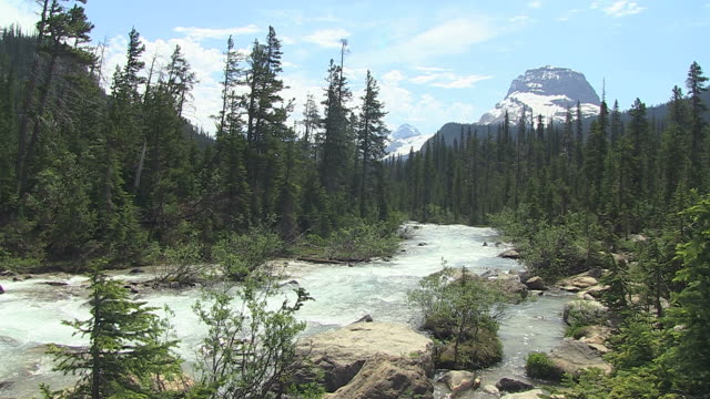 WS View of river flowing through trees near Takkakaw Falls / Yoho Nationalpark, British Columbia, Canada