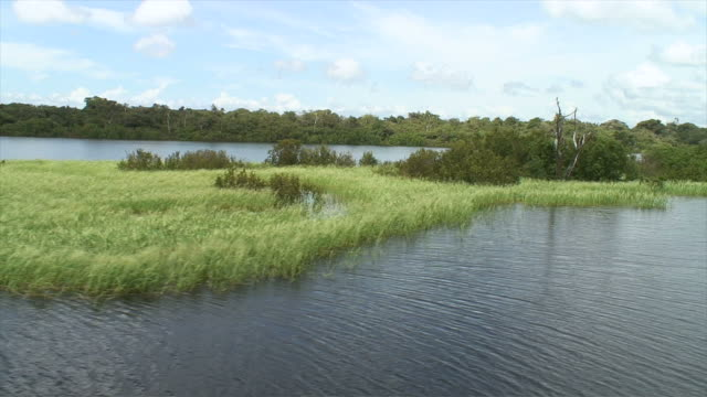 stockvideo's en b-roll-footage met ws pan pov view of river / rio negro, amazonas, brasil - color negro