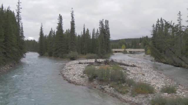 View of river through pine forest near Canmore, Alberta, Canada, North America