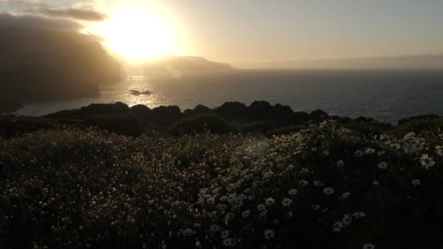 view of rocky coastline and flora at the ponta da sao lourenco at sunset, eastern tip of the island, madeira, portugal, atlantic, europe - flower head stock videos & royalty-free footage