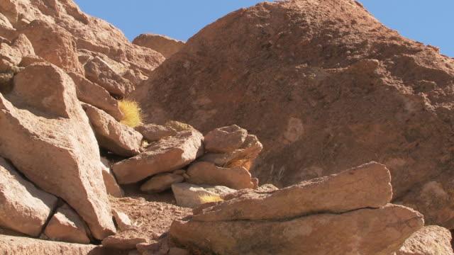 ws view of rocky hillside to viscacha, lagidium viscacia in high andes mountains / san pedro de atacama, norte grande, chile - san pedro de atacama stock videos & royalty-free footage