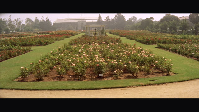 MS TU view of  rose garden in exposition park / Los Angeles