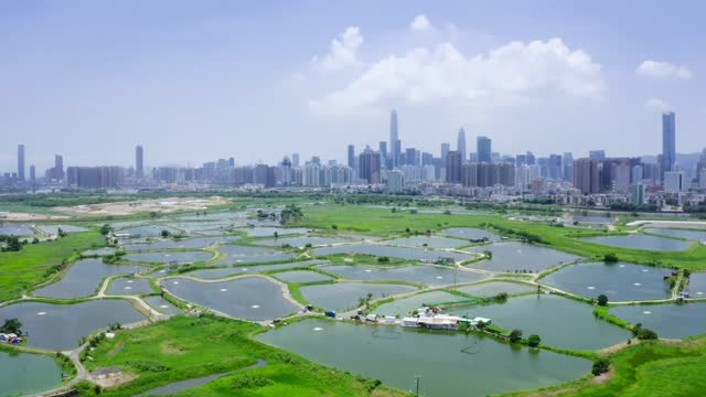view of rural green fields with fish ponds between hong kong and skylines of shenzhen,china - ecosystem stock videos & royalty-free footage