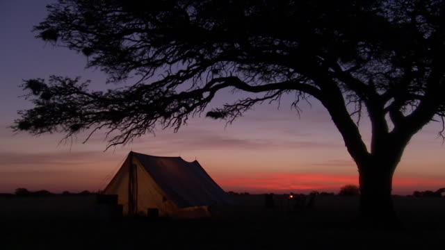 ws view of safari camp under tree after sunset / lindberg, north west, south africa - camping stock videos & royalty-free footage