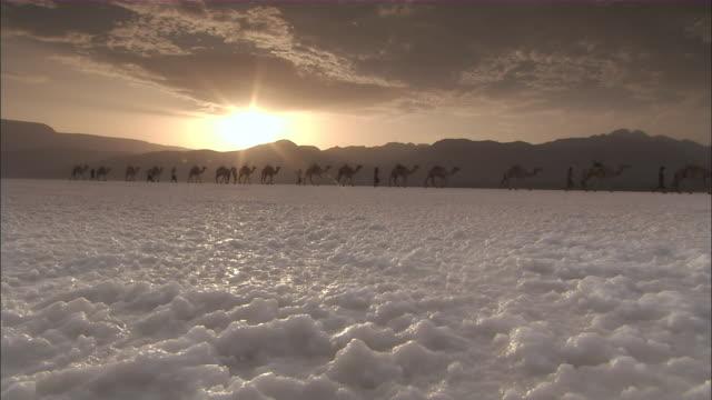 WS  View of salt flat surface with camel caravan / Republic of Djibouti