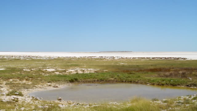ws view of salt flats in namibia / ongava, kunene, namibia - wiese stock videos & royalty-free footage