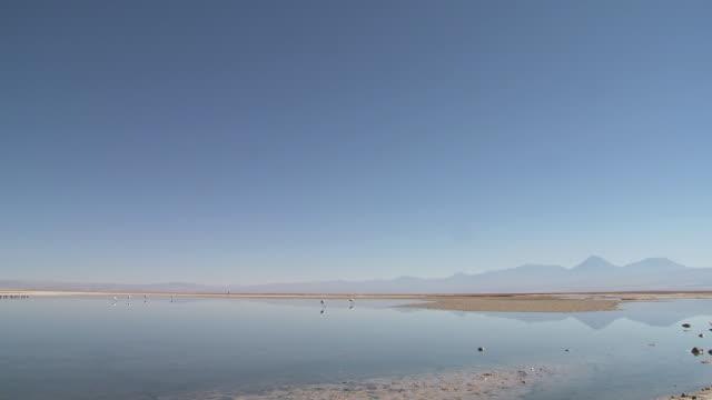 vídeos y material grabado en eventos de stock de ws pan view of salt with distant flamingos feeding in high altitude salt lake with landscape / san pedro de atacama, norte grande, chile - grupo mediano de animales