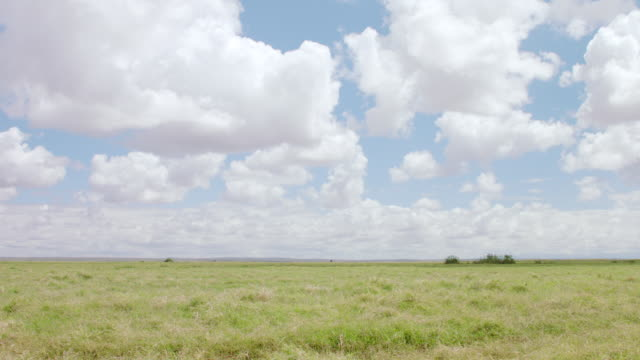 WS PAN View of savanna landscape against blue sky / Kenya