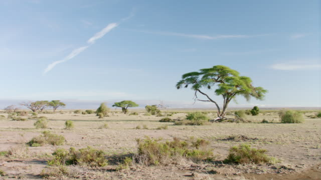 ws view of savanna landscape against blue sky / kenya - grass area stock videos and b-roll footage