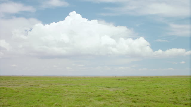 WS PAN View of savanna landscape with clouds in background / Kenya
