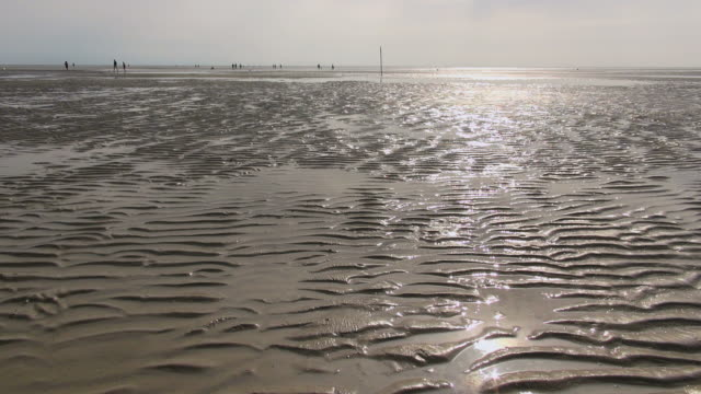 WS View of sea ebb tide at wadden sea and people walking down in, world heritage natural site, North Sea North Frisia, / St. Peter Ording, Schleswig Holstein, Germany