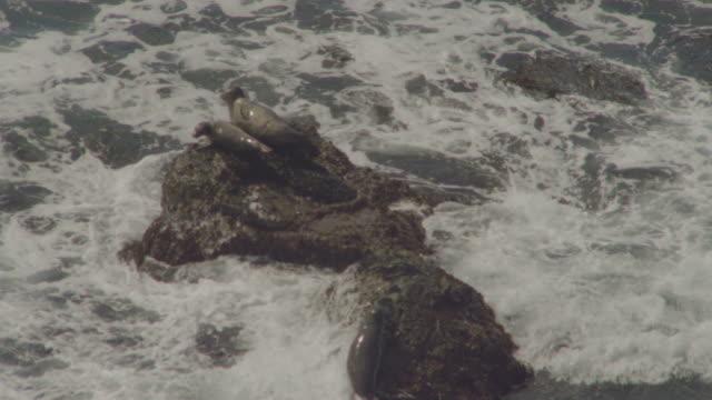 vídeos y material grabado en eventos de stock de ws slo mo view of sea lion laying on rock / big sur, california, united states - cuatro animales