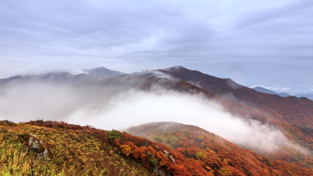 view of sea of clouds covered the yeonhwabong peak in sobaksan mountain (national park) in autumn season in dannyanggun, gyeongsangbuk-do - zona arborea video stock e b–roll