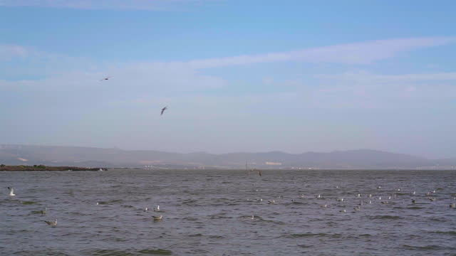 a view of sea waves on the wind - seagull stock videos & royalty-free footage