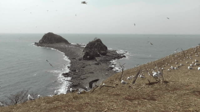 View of seagulls at high tide in Ongjin-gun (Natural habitat for endangered birds), Incheon