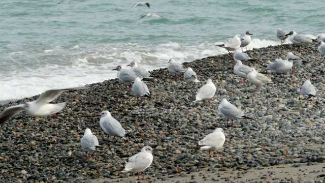 View of Seagulls