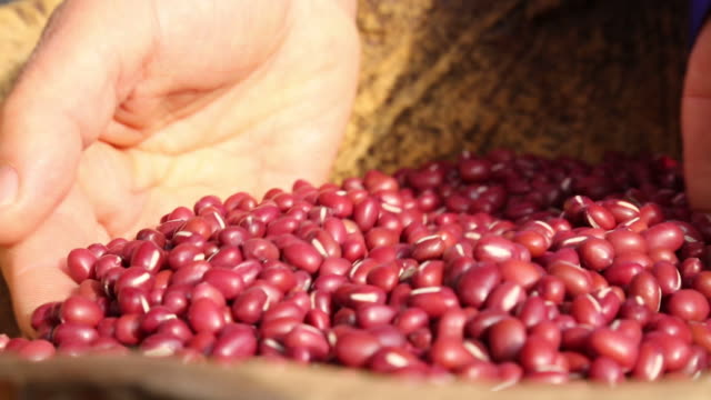 view of selecting fine red beans for making red bean porridge - bean stock videos & royalty-free footage