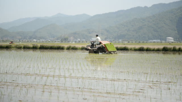 WS View of Senior man generation is work of rice planting, man driving tractor, planting rice seedlings / Toyooka, Hyogo, Japan