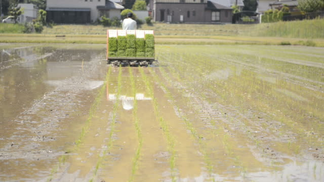 WS TD View of Senior man generation is work of rice planting, man driving tractor, planting rice seedlings / Toyooka, Hyogo, Japan
