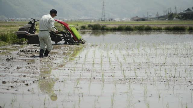 WS PAN View of Senior man generation is work of rice planting, man is planting rice seedlings / Toyooka, Hyogo, Japan